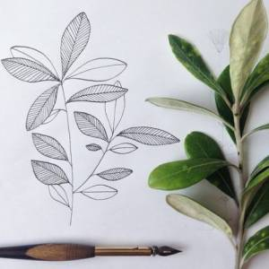 How to draw plants & leaves